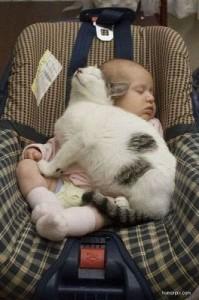 Gata salva a 4 bebes de un incendio